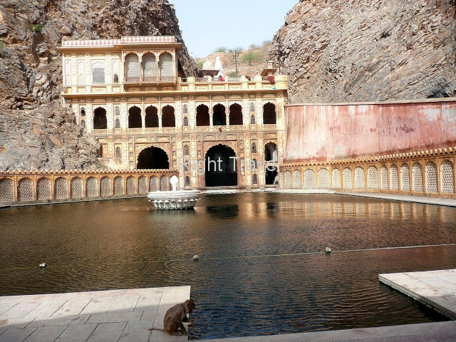 India Jaipur Monkeys Temple