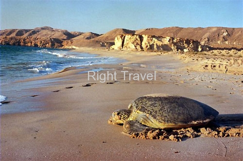 Oman Turtle beach in Ras Al Jinz